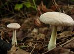 Mooshy Mushroom